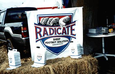 radicate-photo